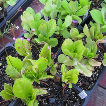On planting seeds – by Robert Louis Stevenson